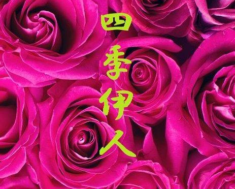 鶴橋 中国エステ リラクゼーション四季伊人(しきいじん) 大阪市東成区